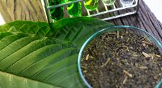 Construct A Kratom Up For Sale Any Individual Would Certainly Take Pride In